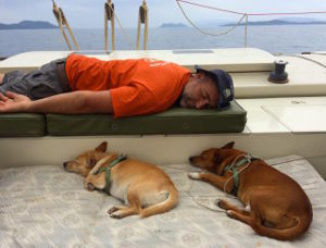 Julius and dogs sleeping on deck