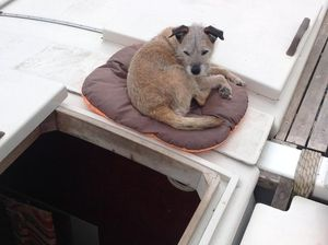 A dog on a cushion on deck