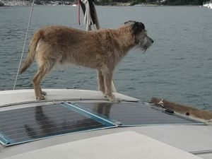A dog on deck