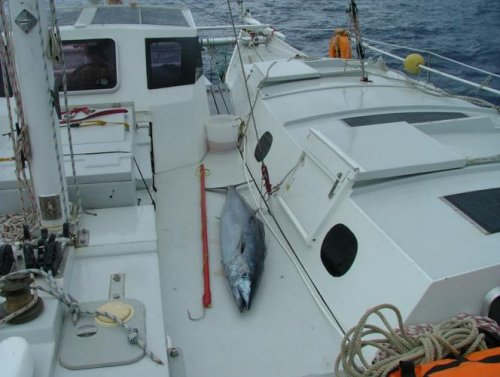 Large Wahoo fish on board