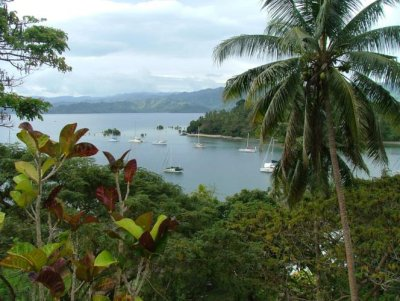 Looking at moored boats through shrubbery in Savusavu