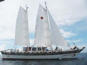 Islander 65