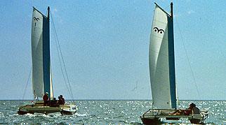 Wharram boats under sail